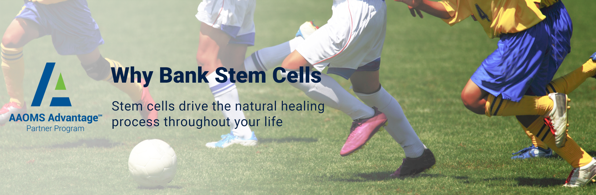 Stem Cell Overview